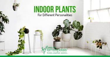 Best-Indoor-Plants-for-Different-Personalities