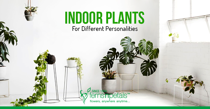 The Best Suited Plants As Per Personality Type Ferns N Petals