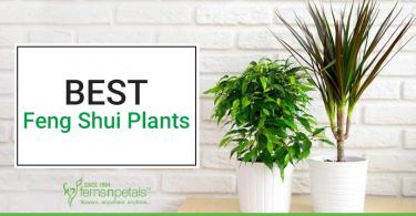 Best-5-Feng-Shui-Plants