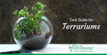 How to Take Care of Terrariums?