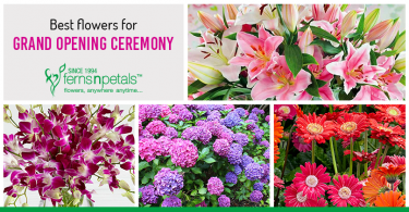 Opening Flower Stands