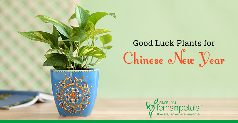 Chinese New Year Plants to bring Good Luck
