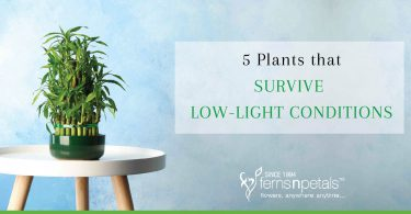 low light sustain plants