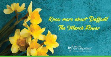 Know-more-about-Daffodil-the-March-Flower