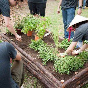 Organic farming & gardening courses