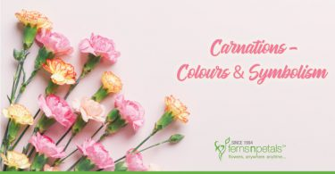Know more about Carnation flowers