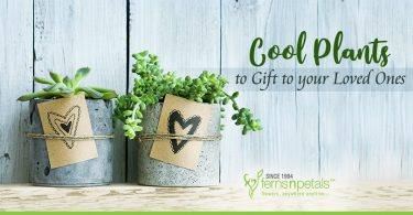 Cool Plants to Gift