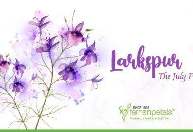 Larkspur- The July Flower