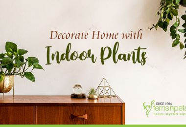 Decorate Home with Indoor Plants