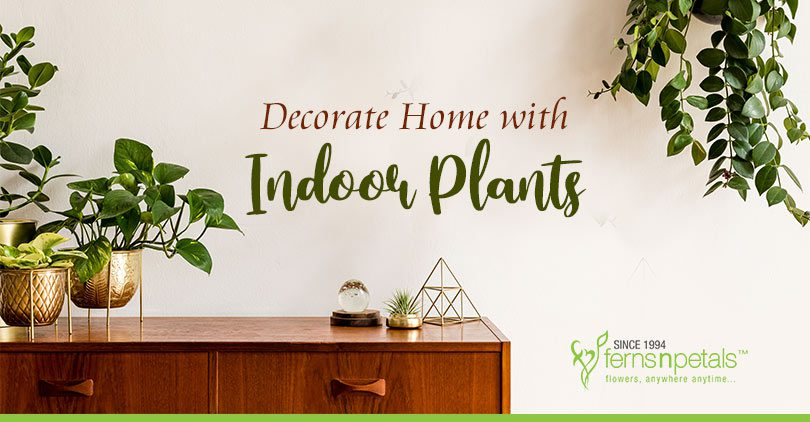 Decorate Home with Indoor Plants
