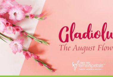 Gladiolus-the-august-flower
