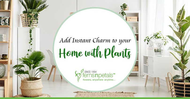 Add Instant Charm to Your Home with Plants