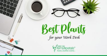 Best Plants for Your Work Desk