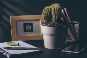 cactus-for-desk