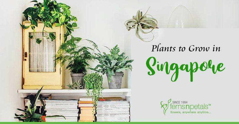 Plants That You Can Easily Grow In Singapore