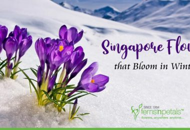 Singapore Flowers that Bloom in Winters