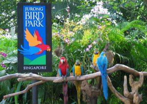 Birds at Jurong Park