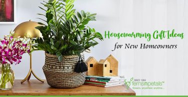 Housewarming Gift Ideas for New Homeowners