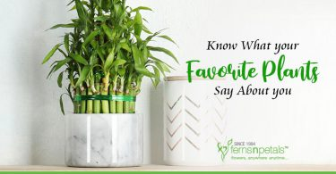 plants and personalities