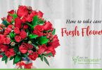 How to take care of Fresh Flowers