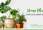 Plants With Great Health Benefits