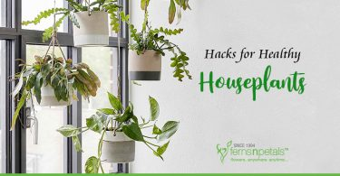 Pro-Tips to Keep your Houseplants Alive