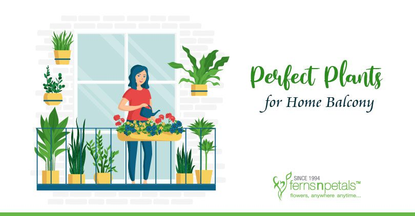 Perfect-plants-for-home-balcony