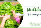 Ideal-Indoor-Plants-for-Aeroponics