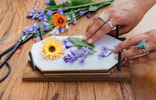 Vibrant Pressed Flowers