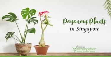 Poisonous-plant-Singapore