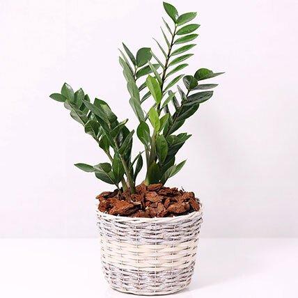 Plant in a Planter