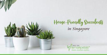 Succulents-in-Singapore