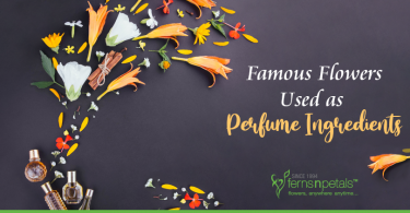 Famous-flowers-used-as-perfume