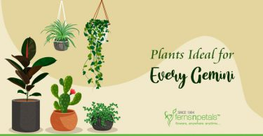 Plants-Ideal-for-every-Gemini
