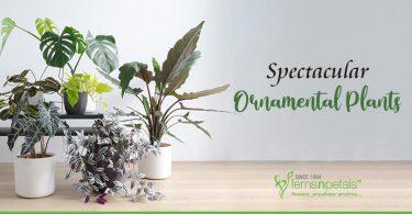 11-Spectacular-Ornamental-Plants