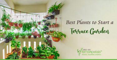 Best Plants for Terrace Garden