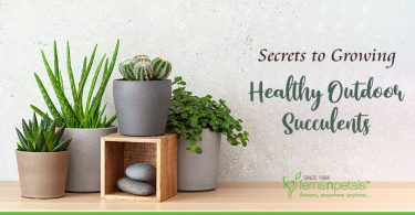 Growing Healthy Succulents