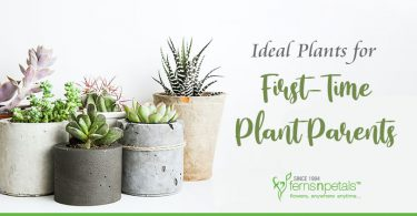 First-Time-Plant-Parents