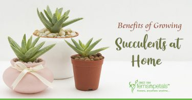 FNP-Succulents-at-Home